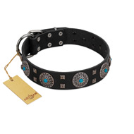 """Boundless Blue"" FDT Artisan Black Leather Bulldog Collar with Chrome Plated Brooches and Square Studs"