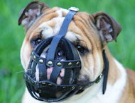 Bulldog Muzzles,Bulldog Leather Muzzles,Bulldog Wire Dog Muzzles,Bulldog Basket Muzzles,Padded Dog Muzzles,Cage Dog Muzzles For Bulldogs