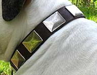 Bulldog Dog Collars, Collars For Bulldogs,Leather Dog Collars,Nylon Dog Collars,Spiked Dog Collars For Bulldogs