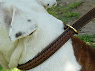 Best 2 Ply Leather Bulldog Choke Collar