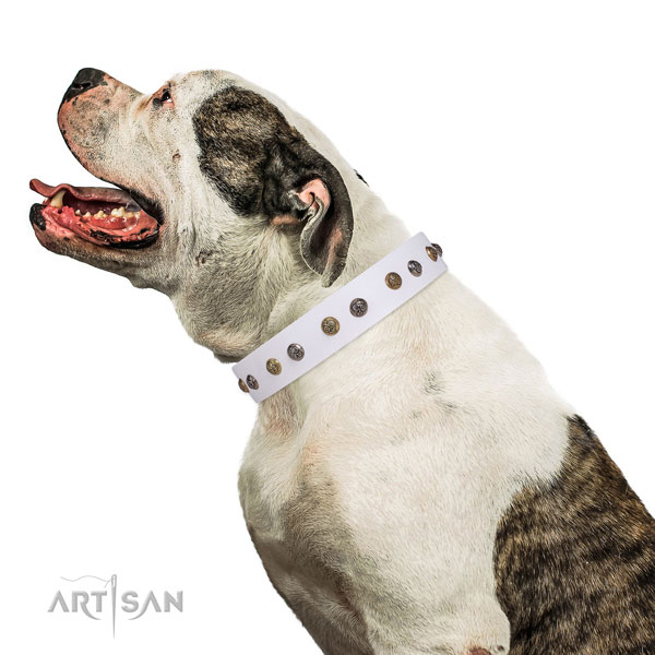 Comfy wearing adorned dog collar made of top rate genuine leather
