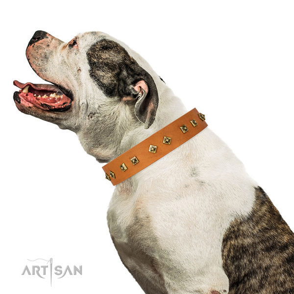 Designer adornments on comfortable wearing dog collar