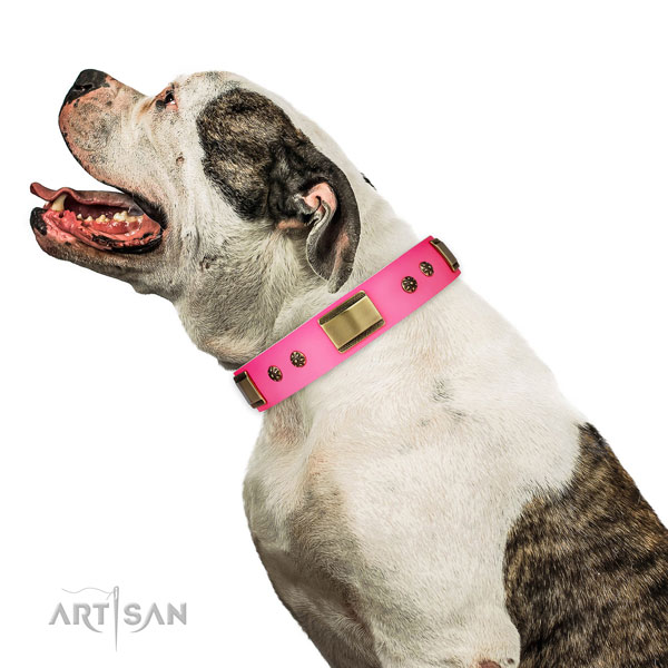 Everyday use dog collar of leather with top notch embellishments