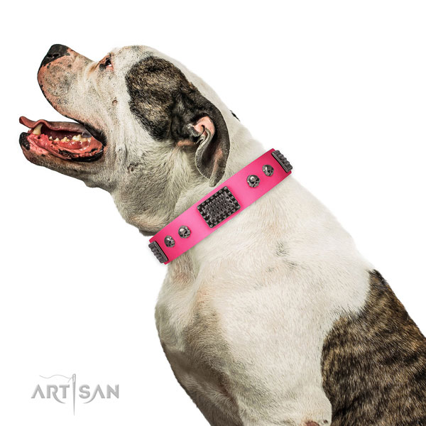 Unusual genuine leather collar for your beautiful canine