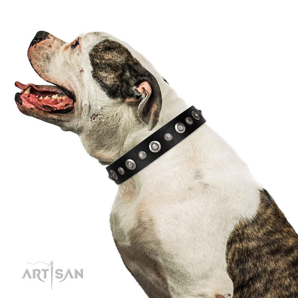 Finest quality leather dog collar with designer studs