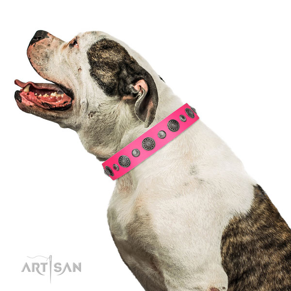 Adorned genuine leather dog collar with corrosion resistant traditional buckle