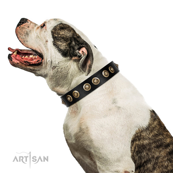 Everyday use dog collar of genuine leather with unique embellishments