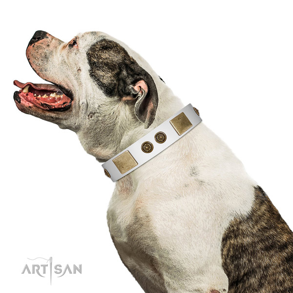 Designer dog collar handcrafted for your beautiful four-legged friend