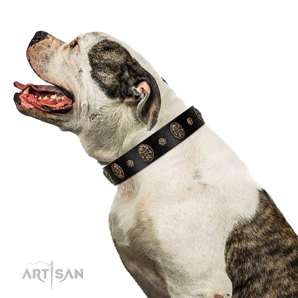 Daily walking dog collar of genuine leather with top notch decorations