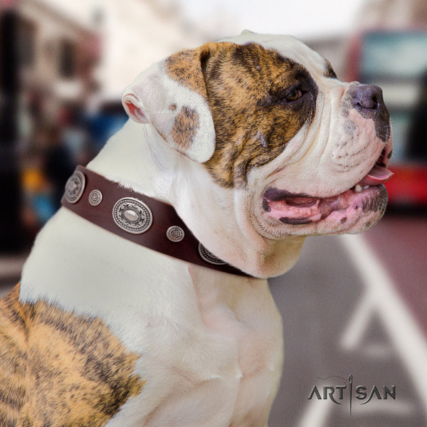 American Bulldog decorated full grain leather dog collar with exceptional adornments