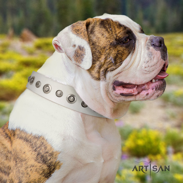 American Bulldog decorated leather dog collar with incredible embellishments
