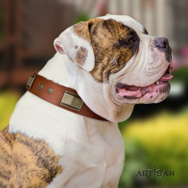 American Bulldog decorated full grain leather dog collar with stylish design studs