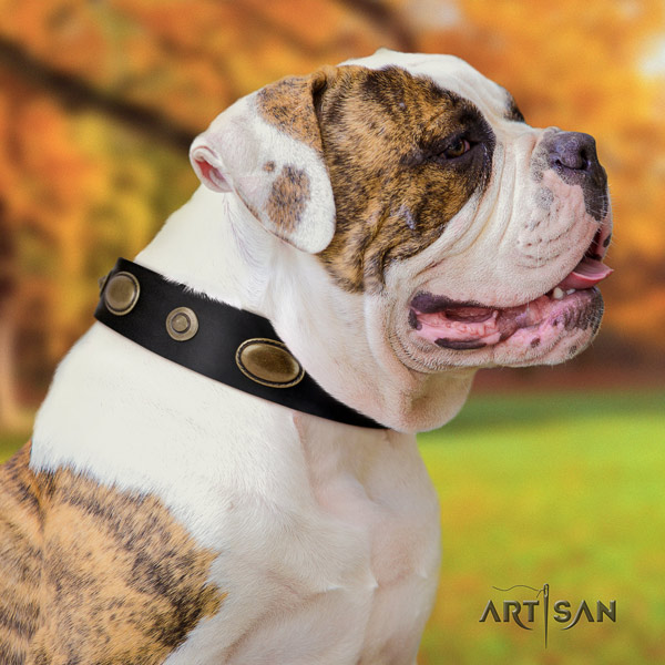 American Bulldog embellished leather dog collar with exquisite embellishments