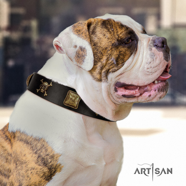 American Bulldog daily walking genuine leather collar with studs for your doggie