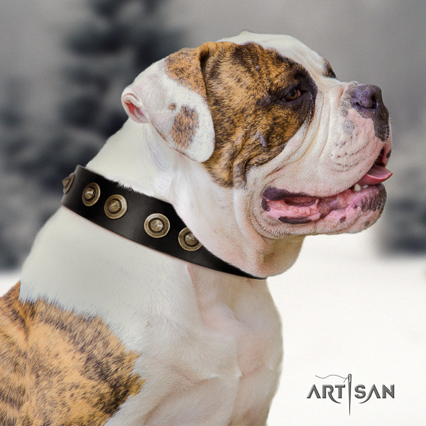 American Bulldog everyday walking full grain genuine leather collar with decorations for your canine