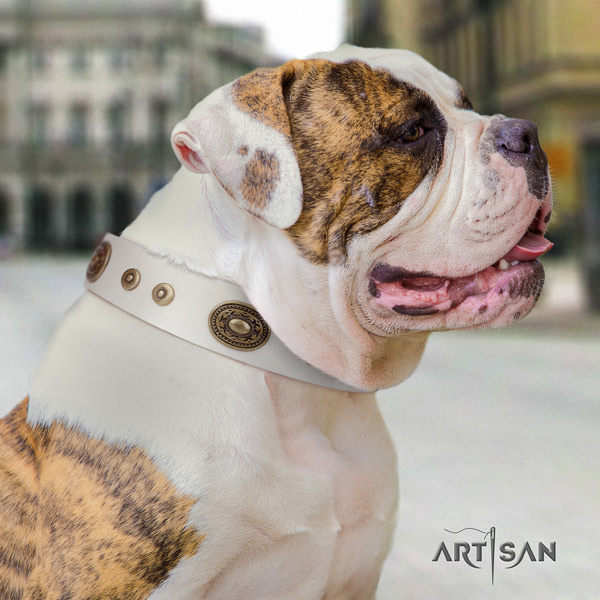 American Bulldog embellished leather dog collar with trendy adornments