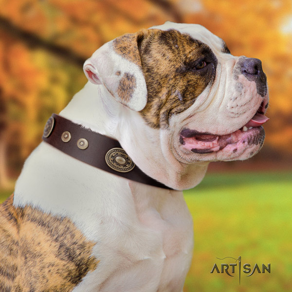 American Bulldog decorated genuine leather dog collar with trendy embellishments