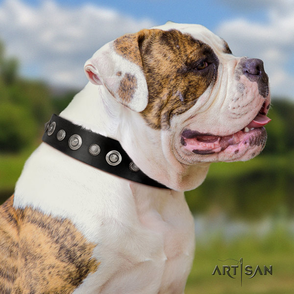 American Bulldog studded genuine leather dog collar with trendy studs