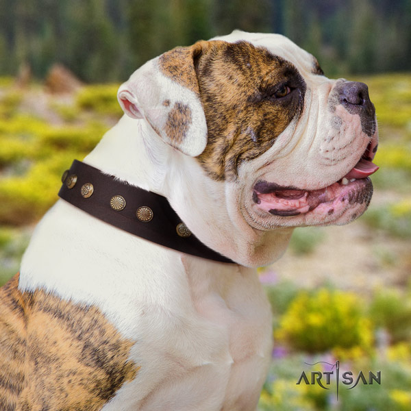 American Bulldog embellished leather dog collar with top notch decorations