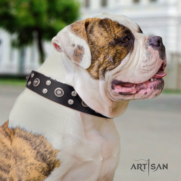 American Bulldog studded genuine leather dog collar with unique decorations