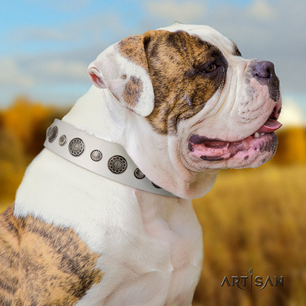 American Bulldog embellished genuine leather dog collar with stunning studs