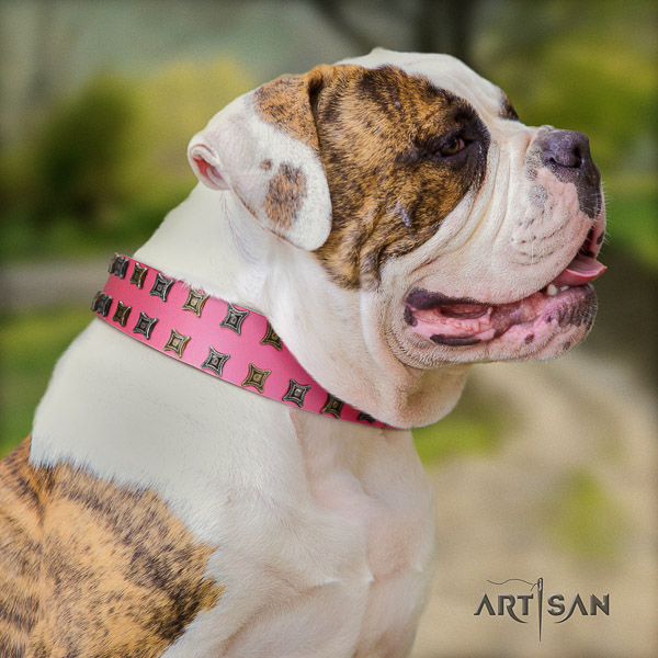 American Bulldog basic training full grain leather collar with decorations for your canine