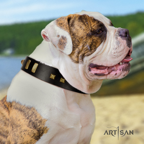 American Bulldog handy use natural leather collar with adornments for your canine