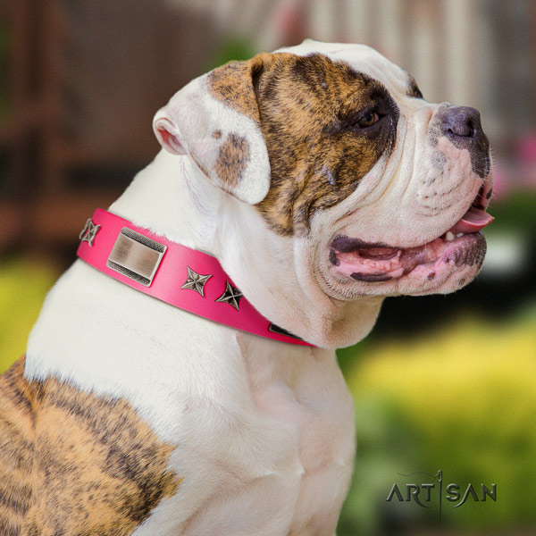 American Bulldog stunning full grain leather dog collar with decorations