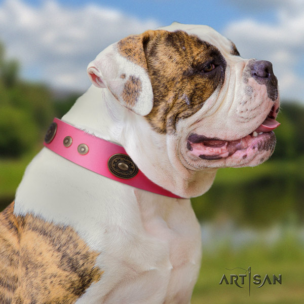 American Bulldog embellished genuine leather dog collar with extraordinary adornments