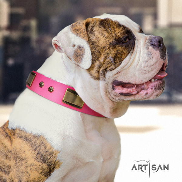 American Bulldog decorated genuine leather dog collar with exceptional embellishments