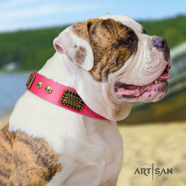 American Bulldog decorated leather dog collar with amazing decorations