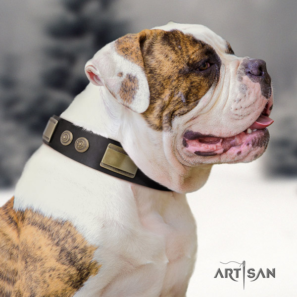 American Bulldog studded leather dog collar with exquisite studs