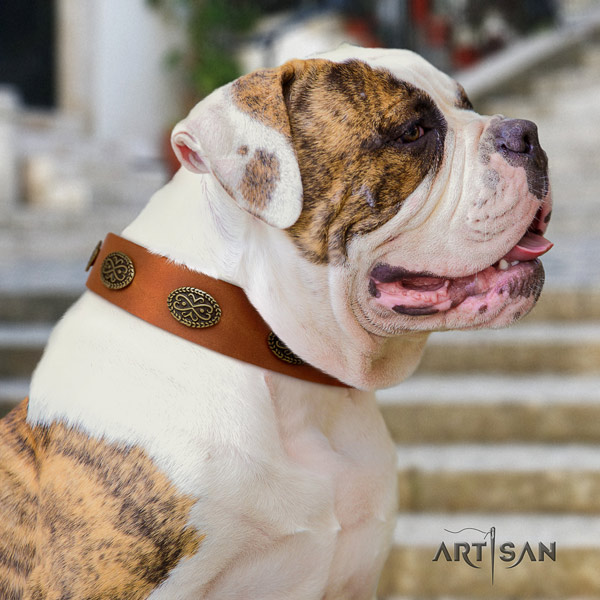 American Bulldog adorned genuine leather dog collar with stylish design adornments