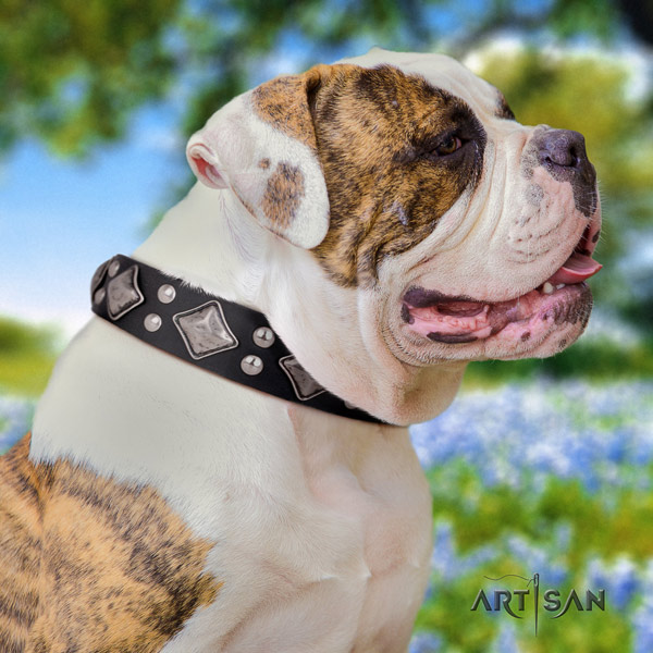 American Bulldog adorned full grain leather dog collar with unusual embellishments