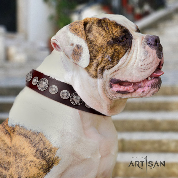 American Bulldog decorated full grain leather dog collar with amazing decorations