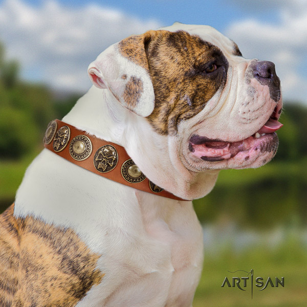 American Bulldog stylish walking leather collar with studs for your pet