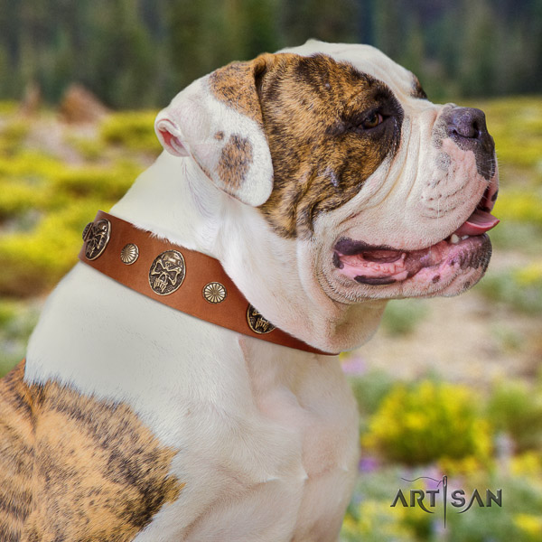 American Bulldog everyday use genuine leather collar with decorations for your dog