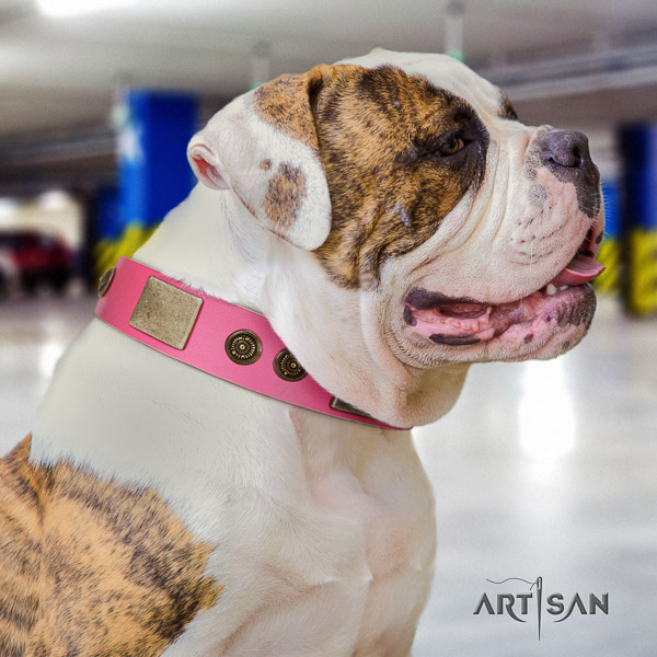 American Bulldog stylish walking genuine leather collar with embellishments for your pet