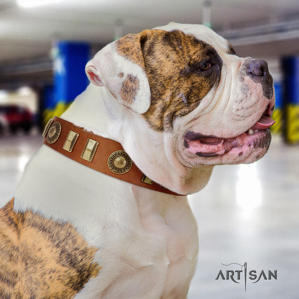 American Bulldog fancy walking full grain genuine leather collar with adornments for your canine