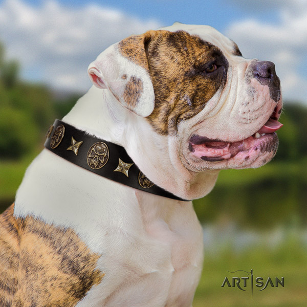 American Bulldog walking full grain genuine leather collar with embellishments for your dog