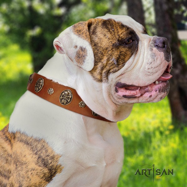 American Bulldog easy wearing leather collar with decorations for your canine