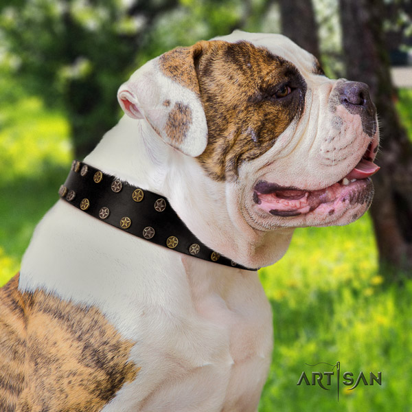 American Bulldog everyday use full grain leather collar with embellishments for your dog