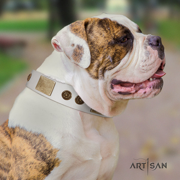 American Bulldog basic training full grain leather collar with decorations for your dog