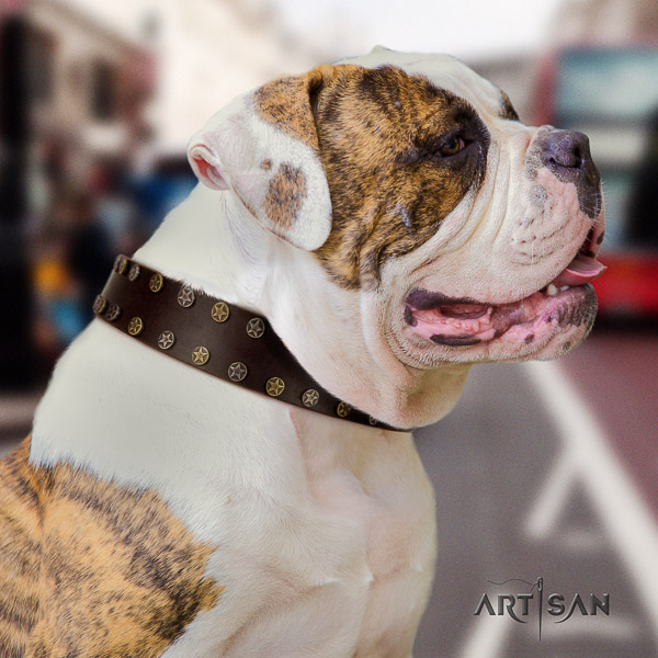 American Bulldog everyday walking natural leather collar with adornments for your four-legged friend