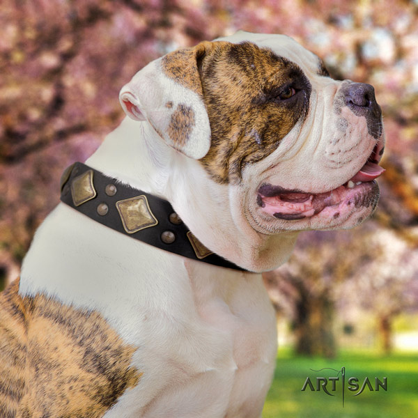 American Bulldog studded full grain leather dog collar with amazing decorations