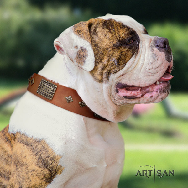 American Bulldog decorated leather dog collar with unusual studs