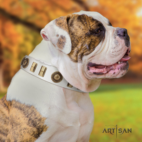 American Bulldog comfortable wearing natural leather collar with decorations for your four-legged friend