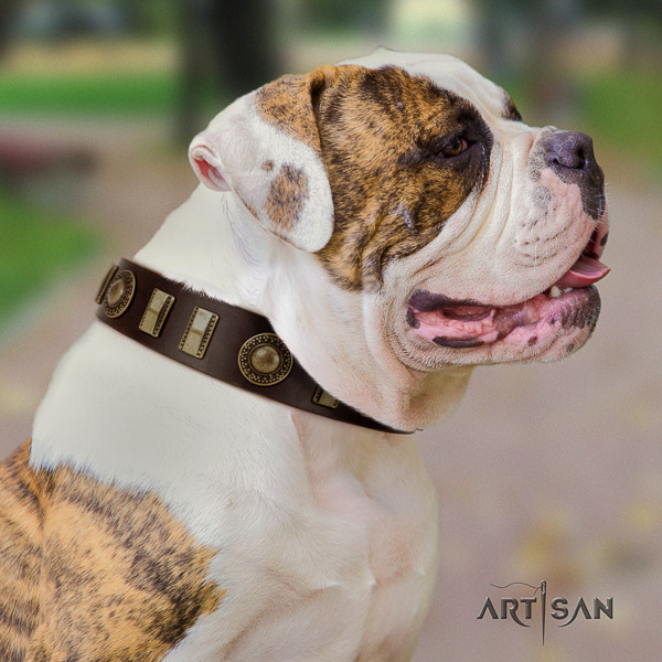 American Bulldog daily use full grain leather collar with studs for your pet