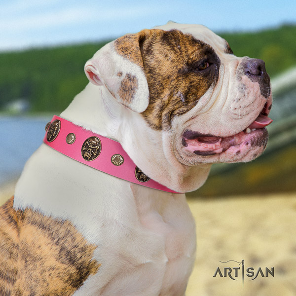 American Bulldog fancy walking full grain leather collar with embellishments for your doggie