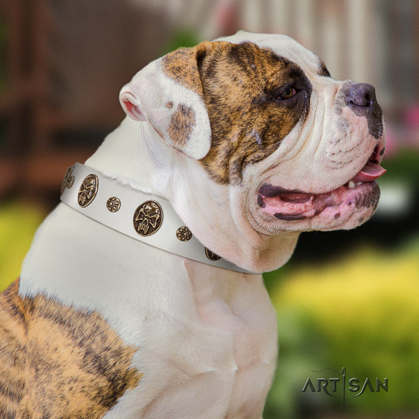 American Bulldog stylish walking genuine leather collar with embellishments for your canine